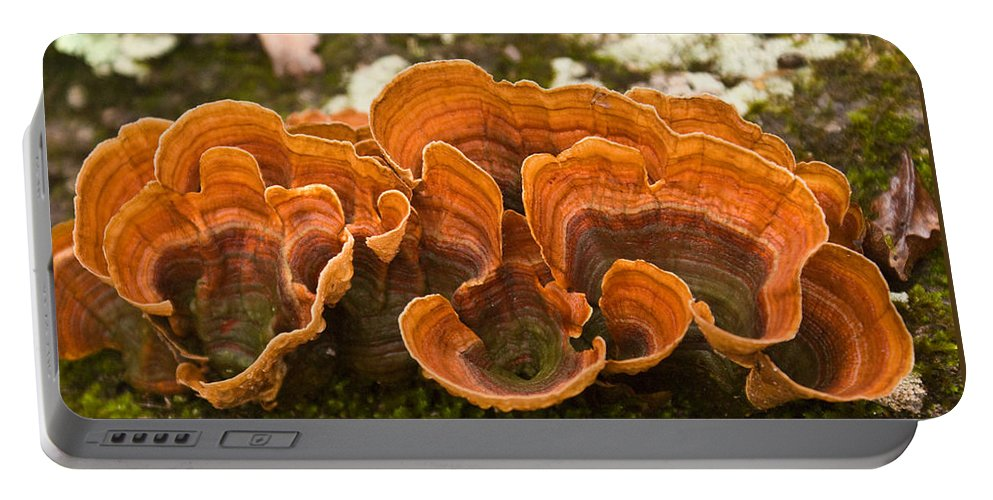 Bracket Portable Battery Charger featuring the photograph Bracket Fungi by Douglas Barnett