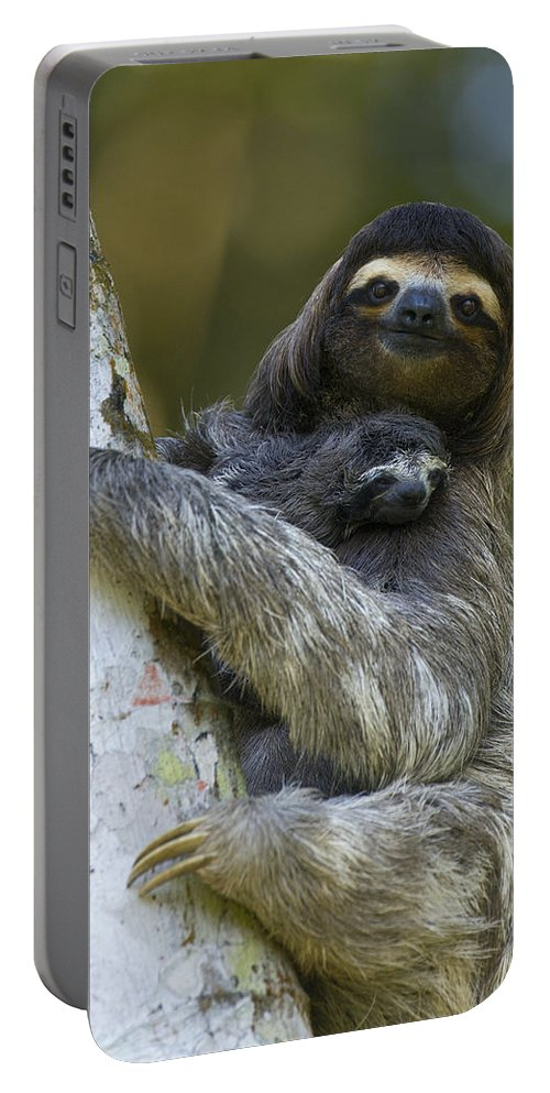 Mp Portable Battery Charger featuring the photograph Brown-throated Three-toed Sloth by Suzi Eszterhas