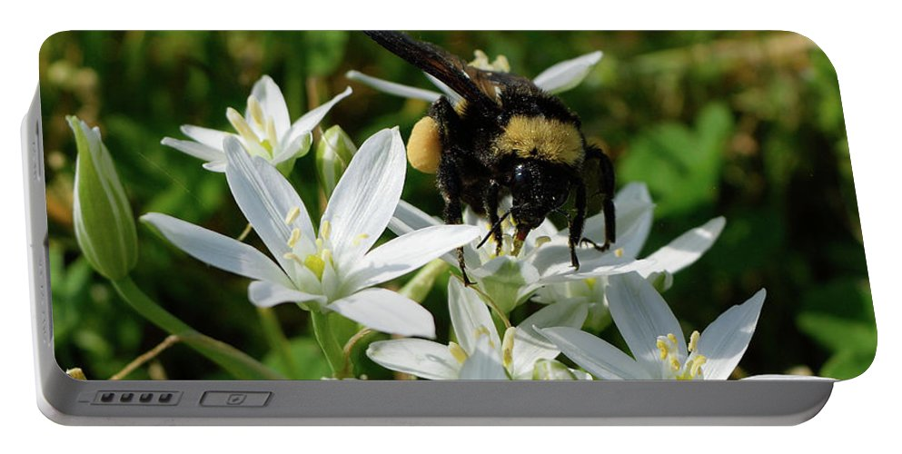 Bee Portable Battery Charger featuring the photograph Busy Bee by Karen Harrison