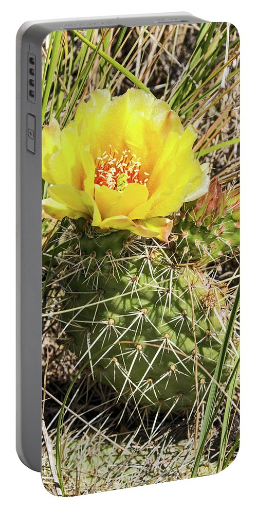 Cactus Portable Battery Charger featuring the photograph Cactus Flower by Ira Marcus