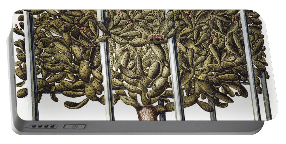 1613 Portable Battery Charger featuring the photograph Cactus: Opuntia, 1613 by Granger