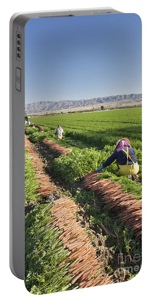 Carrots Portable Battery Charger featuring the photograph Carrot Harvest by Inga Spence
