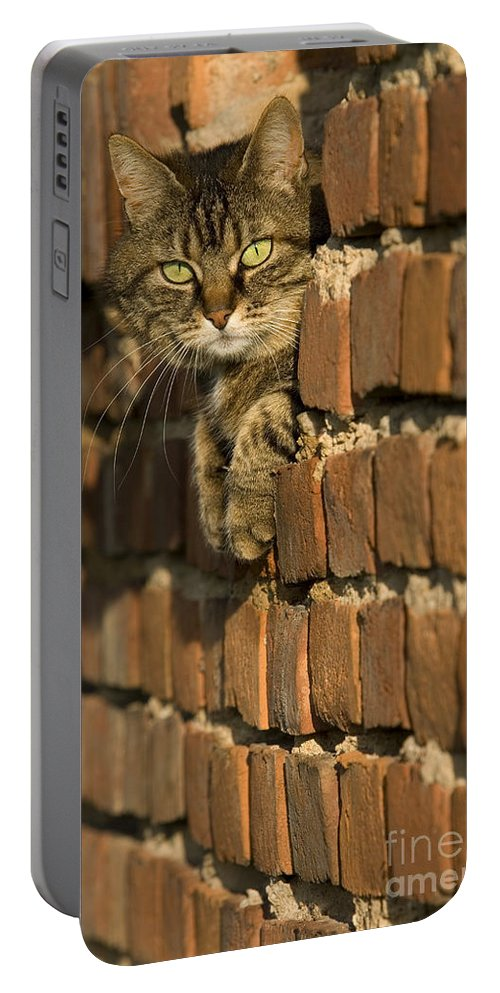 Cat Portable Battery Charger featuring the photograph Cat On A Brick Wall by Jean-Louis Klein & Marie-Luce Hubert