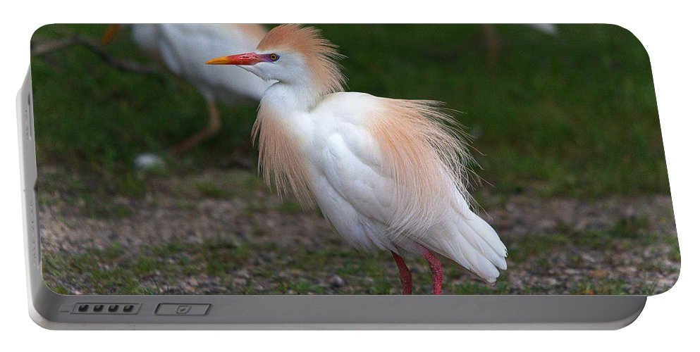 Roy Williams Portable Battery Charger featuring the photograph Cattle Egret Walking Close by Roy Williams