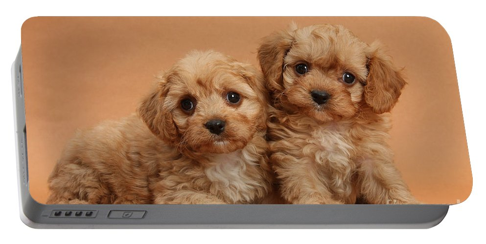 Animal Portable Battery Charger featuring the photograph Cavapoo Pups by Mark Taylor