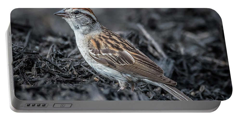 Nature Portable Battery Charger featuring the photograph Chipping Sparrow by Michael Cunningham