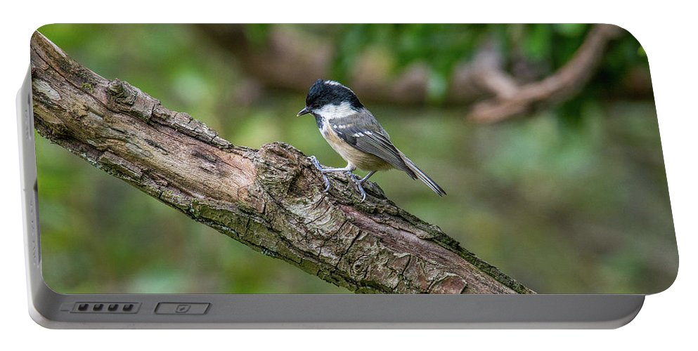 Coal Tit Portable Battery Charger featuring the photograph Coal Tit by Stephen Jenkins