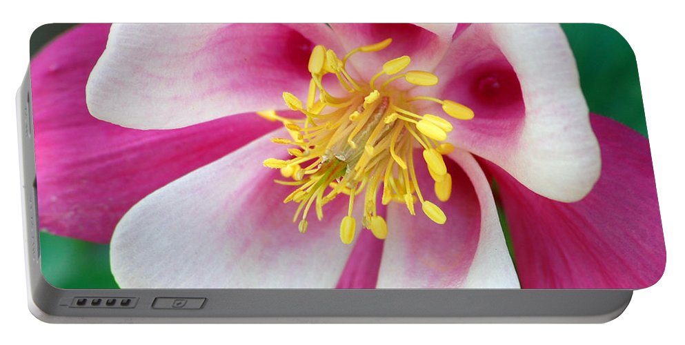 Columbine Portable Battery Charger featuring the photograph Columbine Flower 1 by Amy Fose
