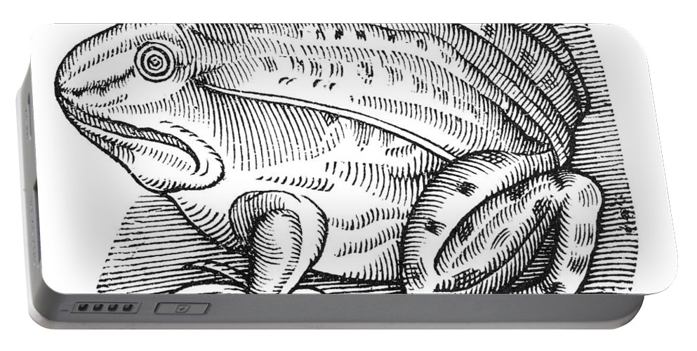 1658 Portable Battery Charger featuring the photograph Common Toad by Granger