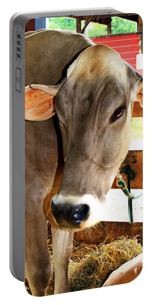 Cows Portable Battery Charger featuring the photograph Cow 2 by Karl Rose