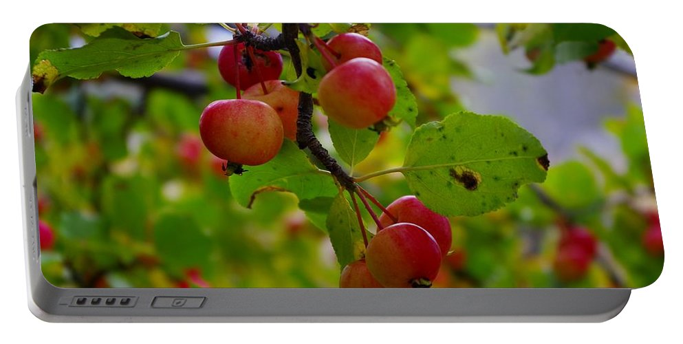 Apples Portable Battery Charger featuring the photograph Crab Apples by Tim Beebe