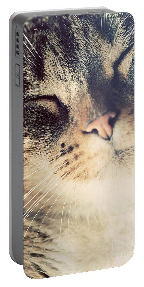 Cat Portable Battery Charger featuring the photograph Cute Small Cat Portrait by Michal Bednarek