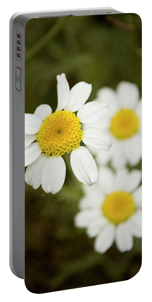 Photography Portable Battery Charger featuring the photograph Daisies #1 by Ignacio Leal Orozco