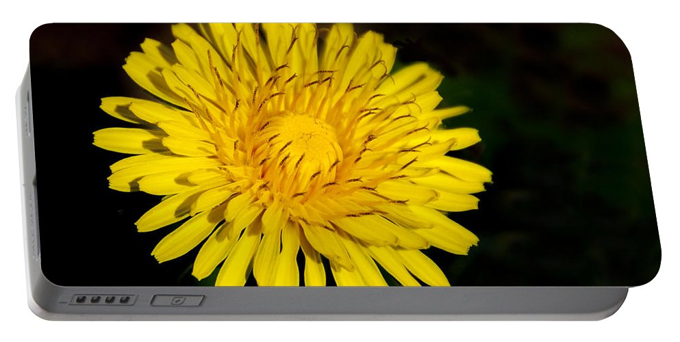 Dandelion Portable Battery Charger featuring the photograph Dandelion by Steven Natanson