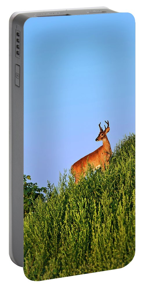 Odocoileus Virginianus Portable Battery Charger featuring the photograph Deer Buck. by John Greim