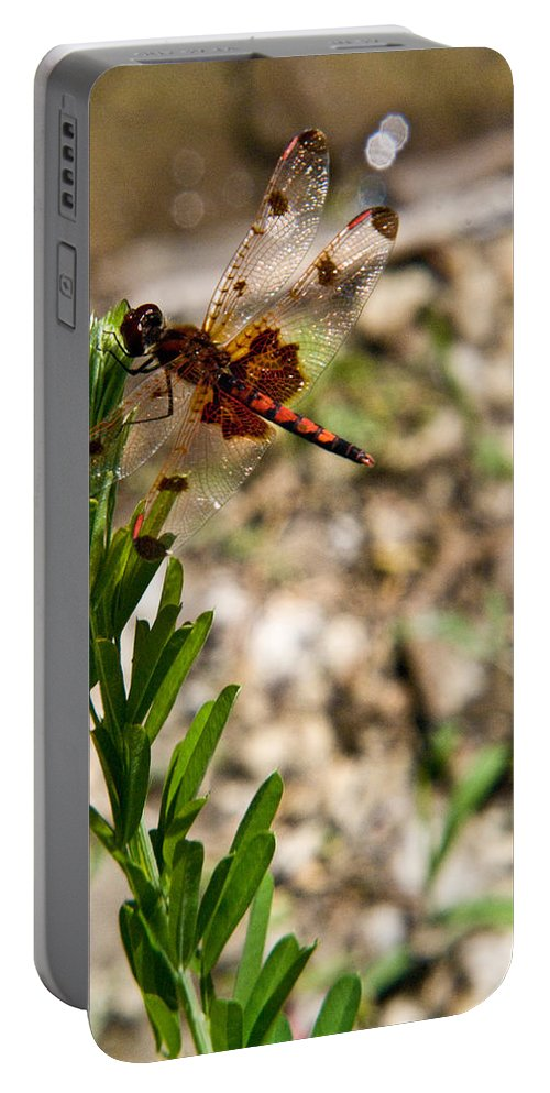 Dragonfly Portable Battery Charger featuring the photograph Dragonfly Resting by Douglas Barnett