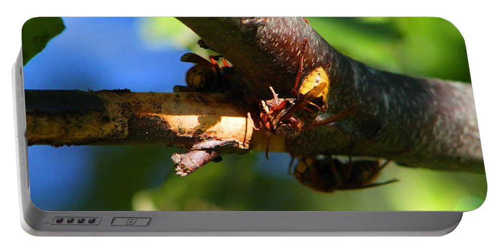 Hornet Portable Battery Charger featuring the photograph European Hornets by Kathryn Meyer