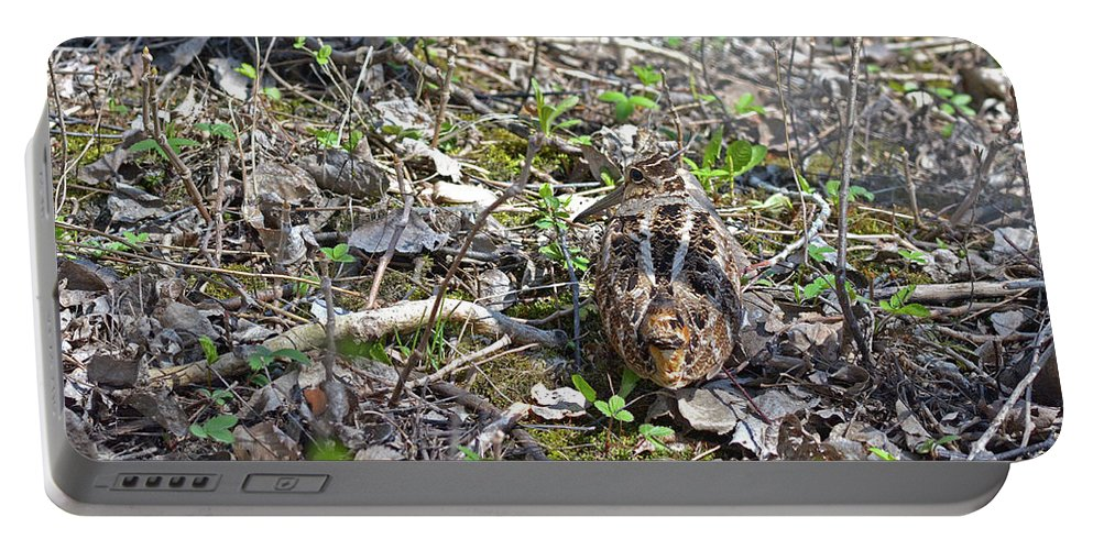 American Woodcock Portable Battery Charger featuring the photograph Eye-contact With The American Woodcock by Asbed Iskedjian
