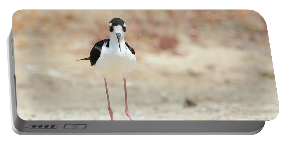 Black-necked Stilt Portable Battery Charger featuring the photograph Face To Face by Fraida Gutovich