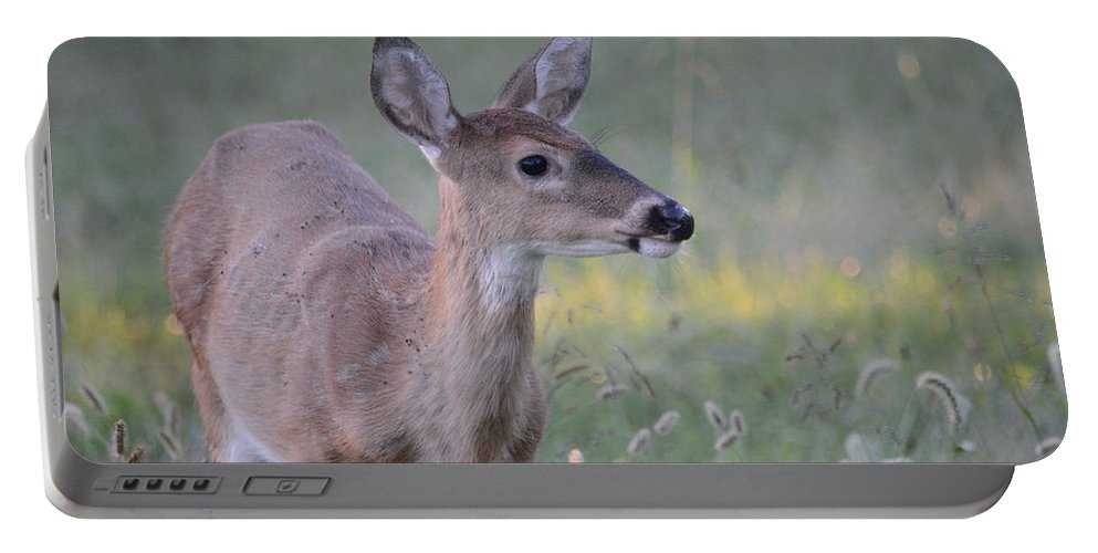 Portable Battery Charger featuring the photograph Fawn by David Irwin