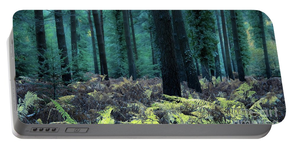 Svetlana Sewell Portable Battery Charger featuring the photograph Fern by Svetlana Sewell