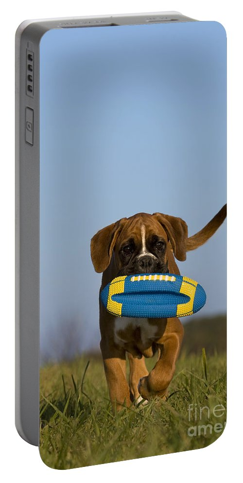 Boxer Portable Battery Charger featuring the photograph Fetching Boxer Puppy by Jean-Louis Klein & Marie-Luce Hubert