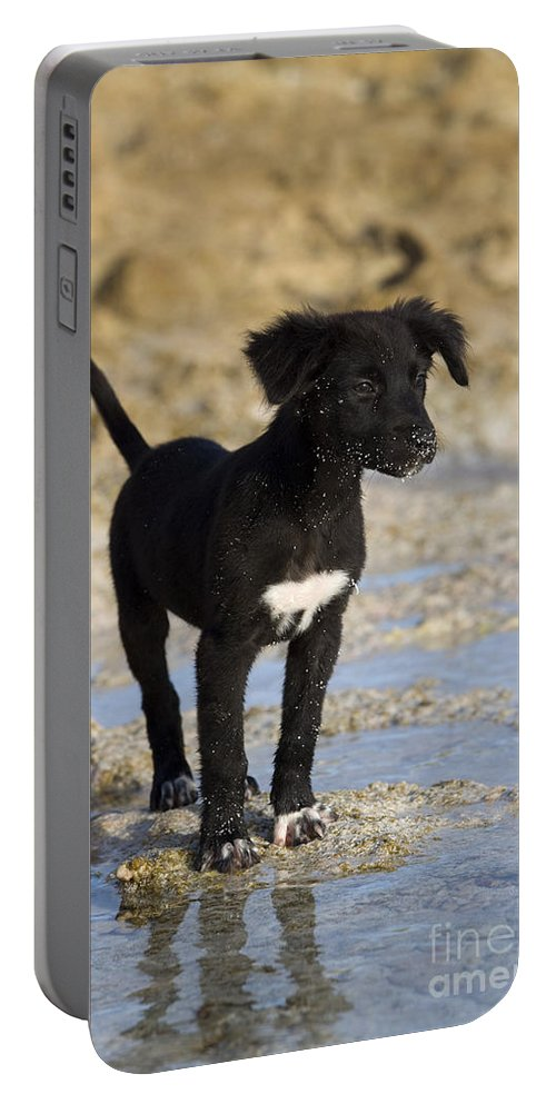 Fishing Dog Portable Battery Charger featuring the photograph Fishing Puppy Of Polynesia by Jean-Louis Klein & Marie-Luce Hubert