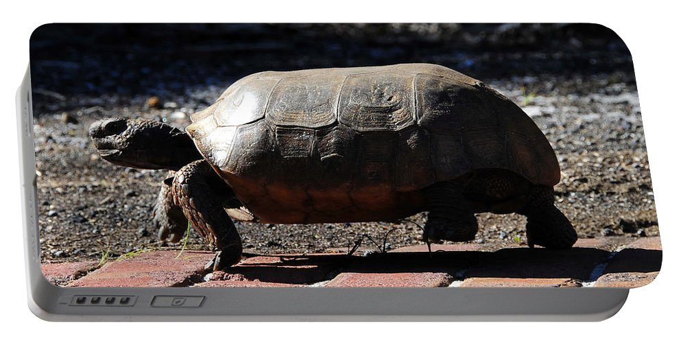 Gopher Tortoise Portable Battery Charger featuring the photograph Florida Gopher Tortoise by David Lee Thompson