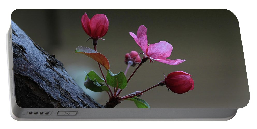 Flowering Crabapple Portable Battery Charger featuring the photograph Flowering Crabapple by Gary Wing