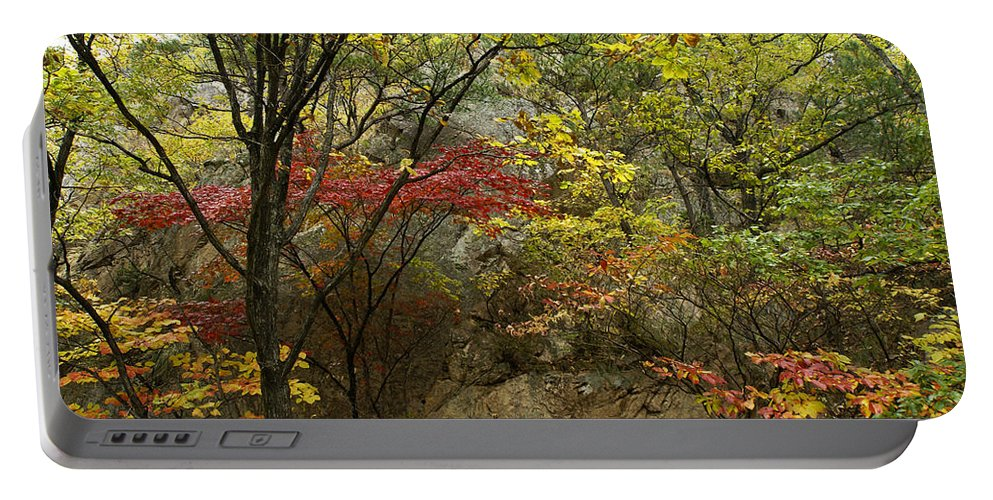 Autumn Portable Battery Charger featuring the photograph Forest In Autumn by Michele Burgess