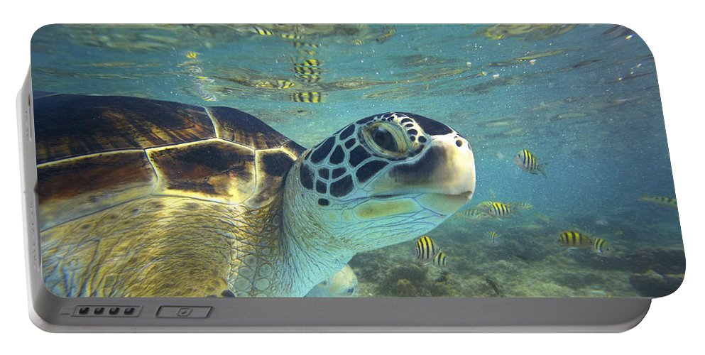 00451417 Portable Battery Charger featuring the photograph Green Sea Turtle Balicasag Island by Tim Fitzharris