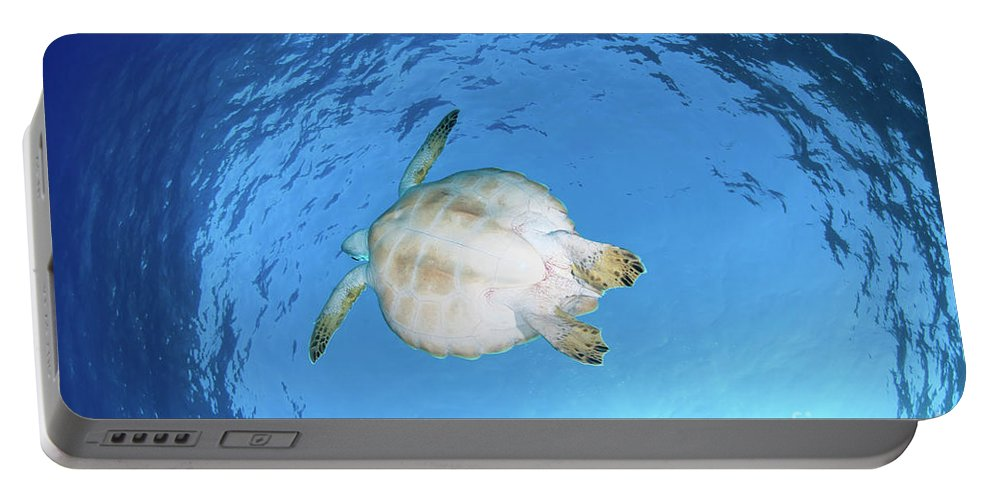 Green Portable Battery Charger featuring the photograph Green Sea Turtle by Hagai Nativ