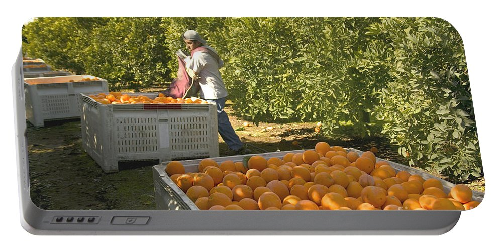 Orange Portable Battery Charger featuring the photograph Harvesting Navel Oranges by Inga Spence