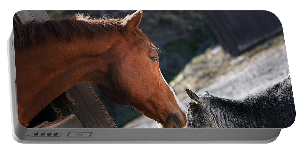 Horse Portable Battery Charger featuring the photograph Hello Friend by Angela Rath