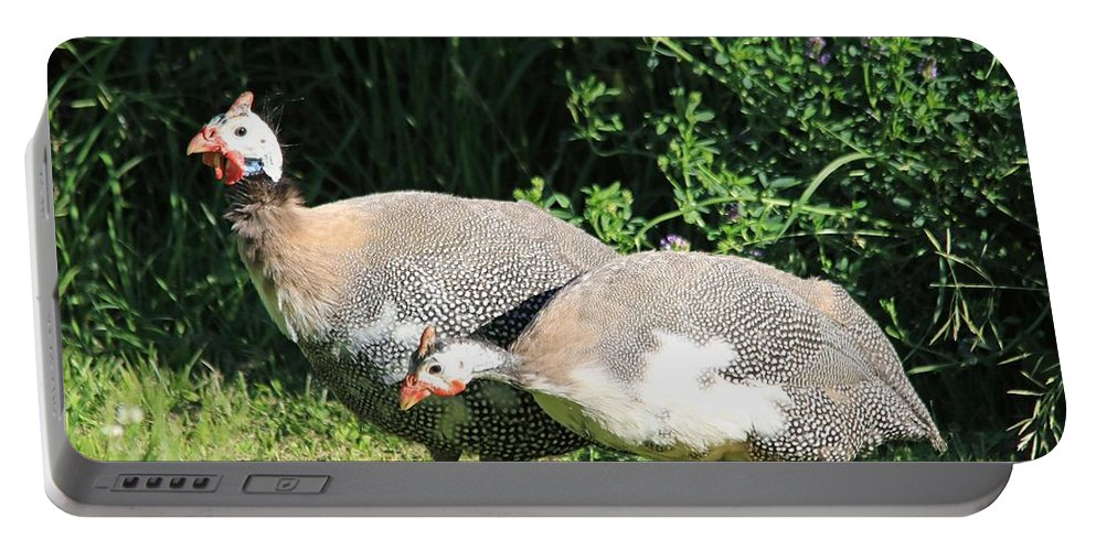 Mccombie Portable Battery Charger featuring the photograph Helmeted Guineafowl by J McCombie