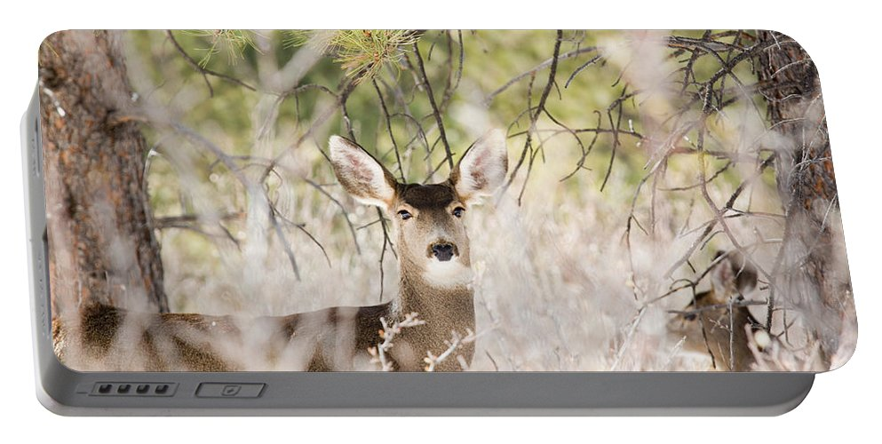 Deer Portable Battery Charger featuring the photograph Herd Of Mule Deer In Deep Snow by Steve Krull