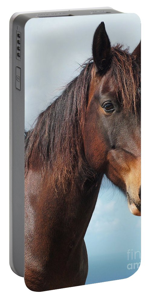 Horse Portable Battery Charger featuring the photograph Horse Portrait by Gaspar Avila