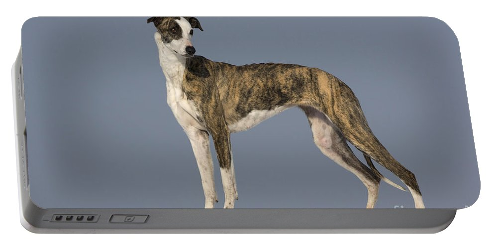 Hungarian Greyhound Portable Battery Charger featuring the photograph Hungarian Greyhound by Jean-Louis Klein & Marie-Luce Hubert