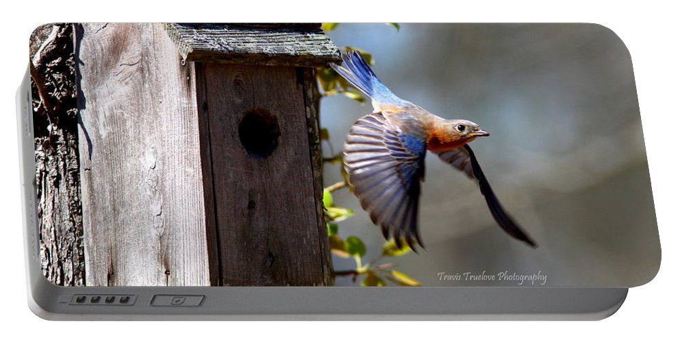 Eastern Bluebird Portable Battery Charger featuring the photograph Img_1414-003 - Eastern Bluebird by Travis Truelove