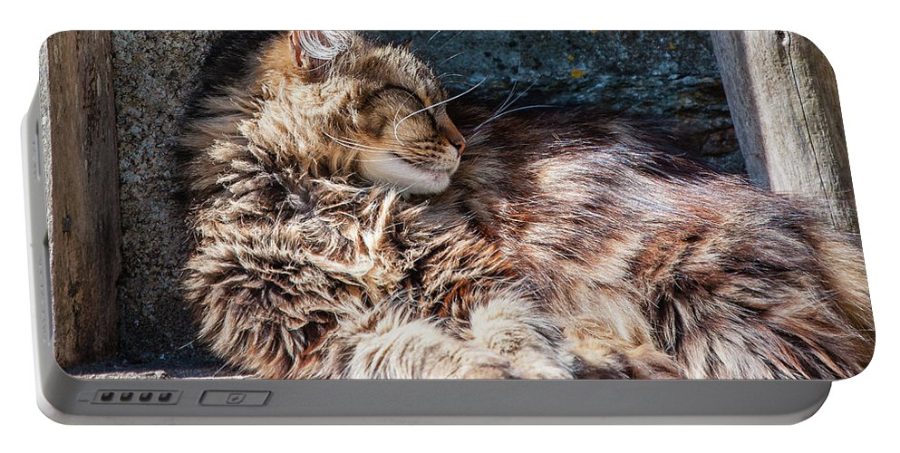 Cat Portable Battery Charger featuring the photograph It's A Hard Life 2 by Geoff Smith