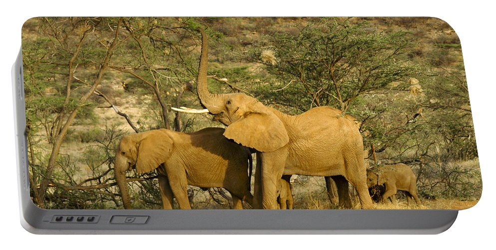 Africa Portable Battery Charger featuring the photograph It's A Stretch by Michele Burgess