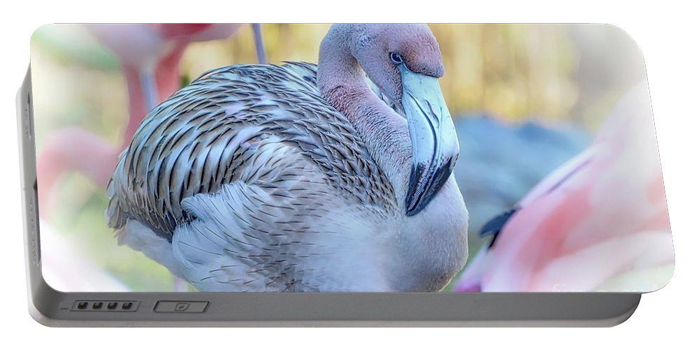 Flamingo Portable Battery Charger featuring the photograph Juvenile Flamingo by Kathy Baccari