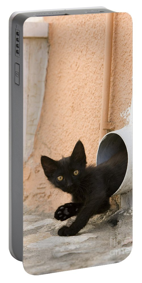 Cat Portable Battery Charger featuring the photograph Kitten In A Pipe by Jean-Louis Klein & Marie-Luce Hubert
