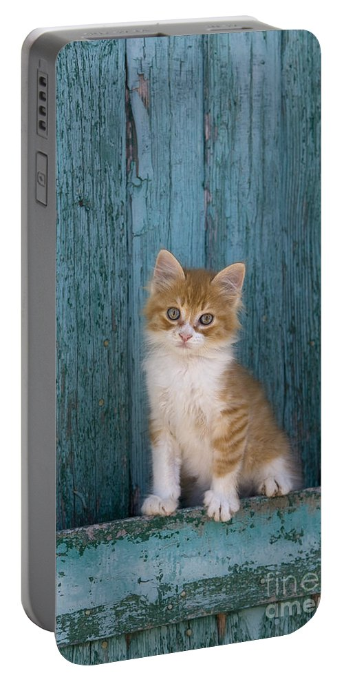 Cat Portable Battery Charger featuring the photograph Kitten On A Greek Island by Jean-Louis Klein & Marie-Luce Hubert