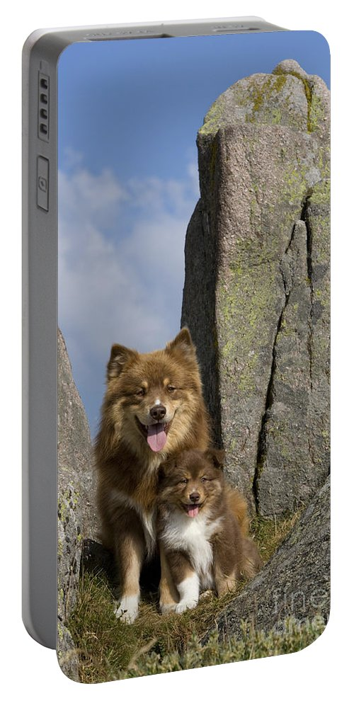 Lapinkoira Dog Portable Battery Charger featuring the photograph Lapinko�ra Dog And His Pup by Jean-Louis Klein & Marie-Luce Hubert