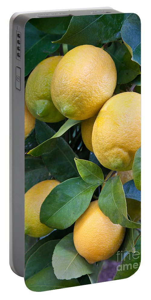 Tree Portable Battery Charger featuring the photograph Lemon Tree by Inga Spence