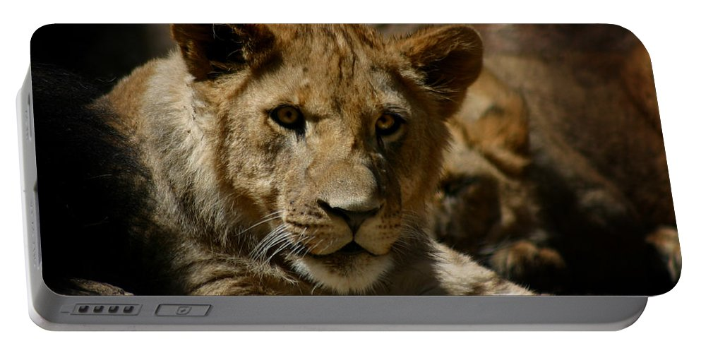 Lion Portable Battery Charger featuring the photograph Lion Cub by Anthony Jones