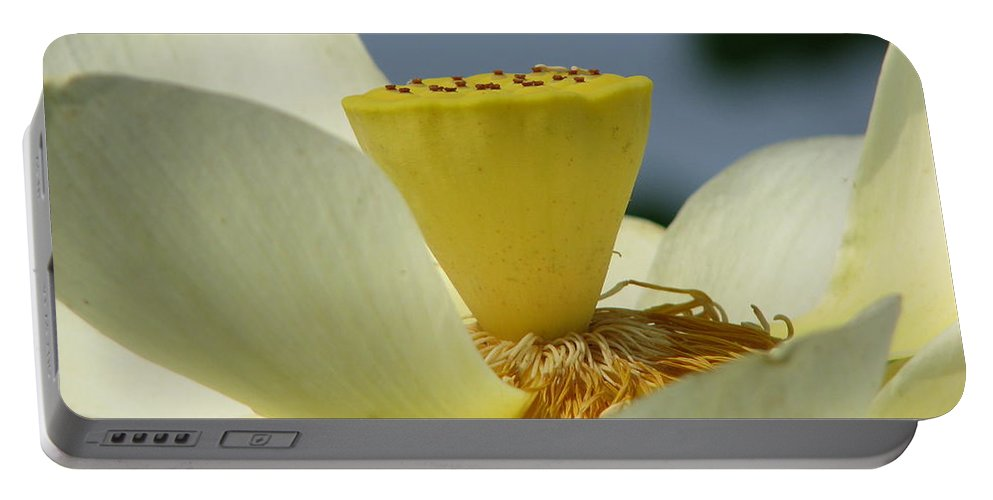 Lotus Portable Battery Charger featuring the photograph Lotus by Amanda Barcon