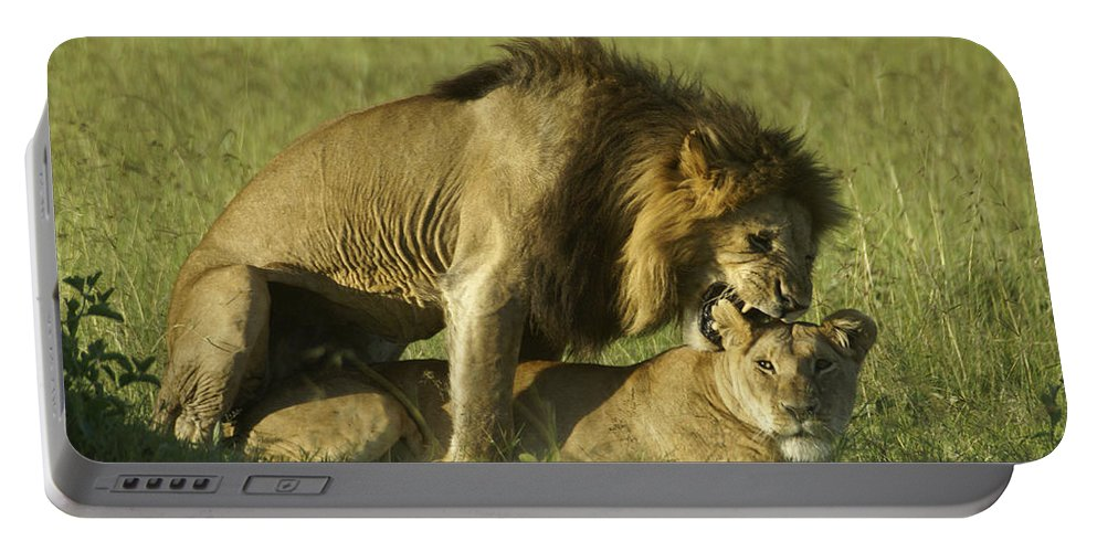 Africa Portable Battery Charger featuring the photograph Love Bite by Michele Burgess