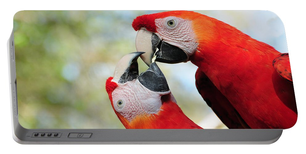 Bird Portable Battery Charger featuring the photograph Macaws by Steven Sparks